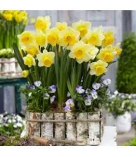 Comprar Servilleta para decoupage Conjunto de Narcisos de Conideade