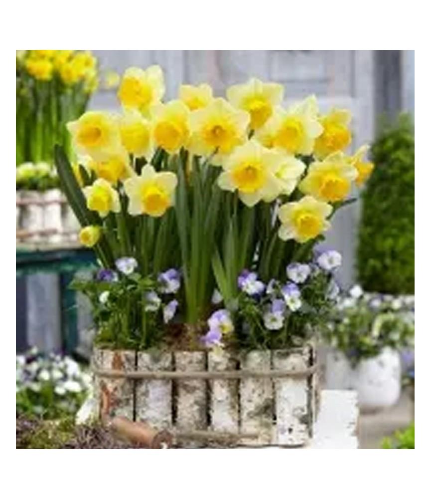 Servilleta para decoupage Conjunto de Narcisos