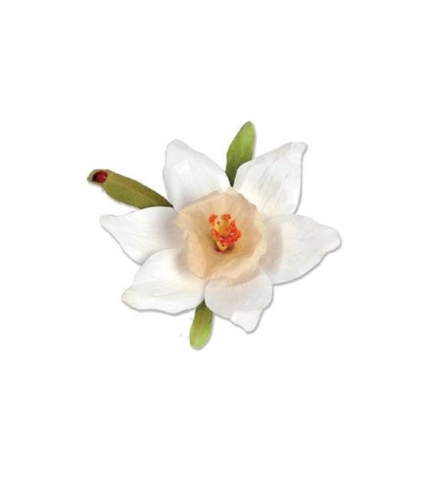 Set 12 Troqueles Thinlits Flor de Narciso