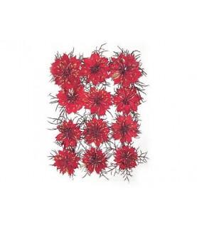 Flor seca prensada gypsophlia rojo