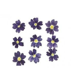 Comprar Flor seca prensada mini verbena azul de Conideade