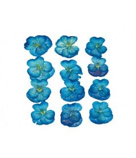 Flor seca prensada viola azul