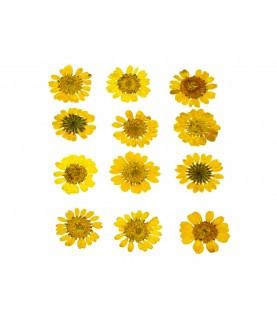 Flor seca prensada mini chrysanthemum amarillo