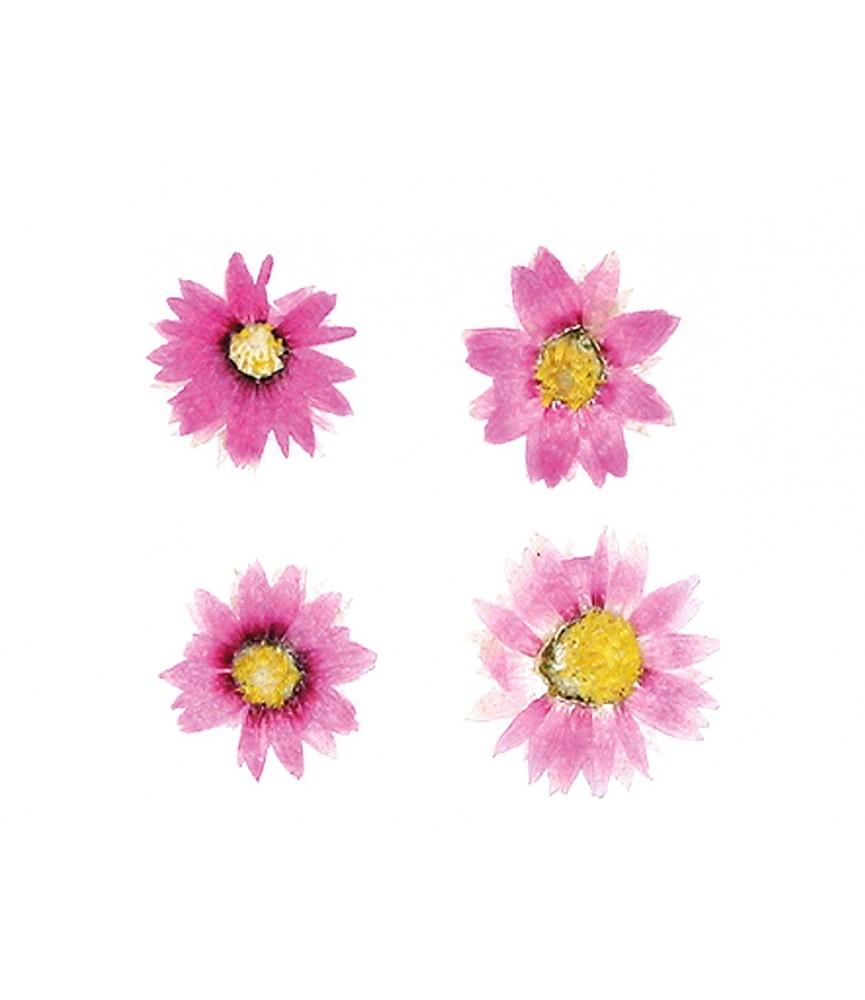 Flor seca prensada thin steam rosa