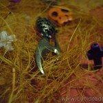 Colgante gato Halloween - Material para manualidades www.conideade.com