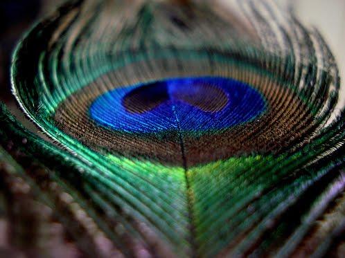 pluma de pavo real para manualidades